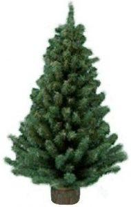 Kurt Adler 12Miniature Pine tree