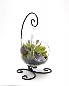 """6"""" Oval Glass With Black Stand terrarium kit"""