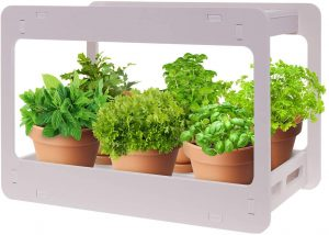 planters choice herb garden kit