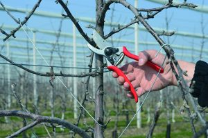 best pruners for trees